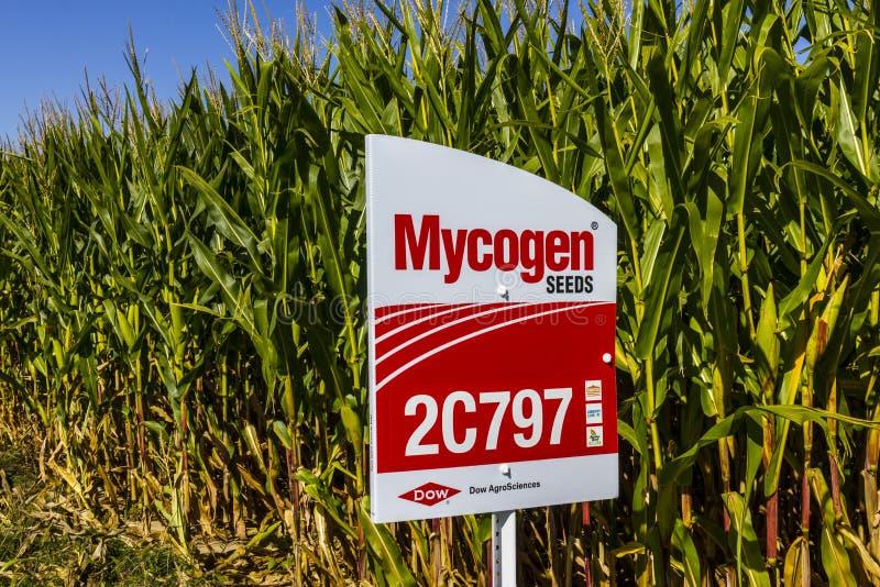 Indianapolis - Około Wrzesień 2017: Mycogen Sia Signage w kukurydzanym polu Mycogen ziarna są filią Dow AgroSciences II obraz stock