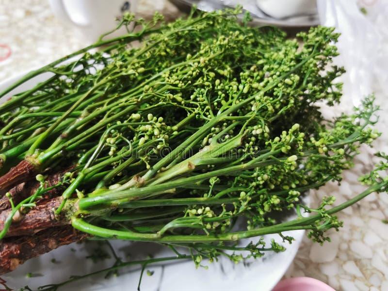 Indica lub siam Nim gorzkie warzywa ziołowe Thai lokalne tradycyjne medycyna i żywność jeść fotografia royalty free