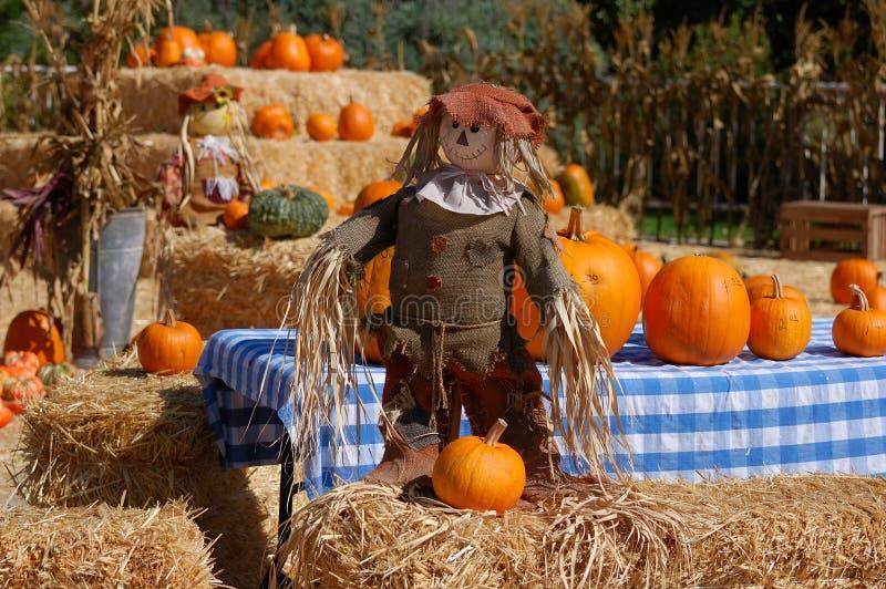 Indicador de Halloween foto de stock royalty free