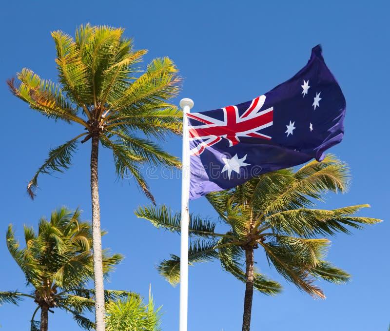 Indicador en Australia tropical con las palmeras imagen de archivo
