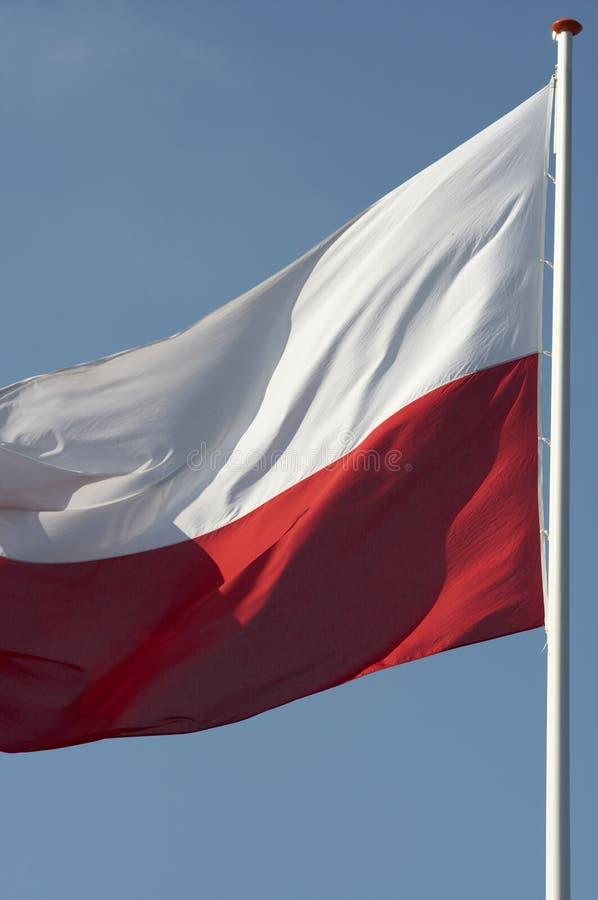 Indicateur polonais photographie stock libre de droits