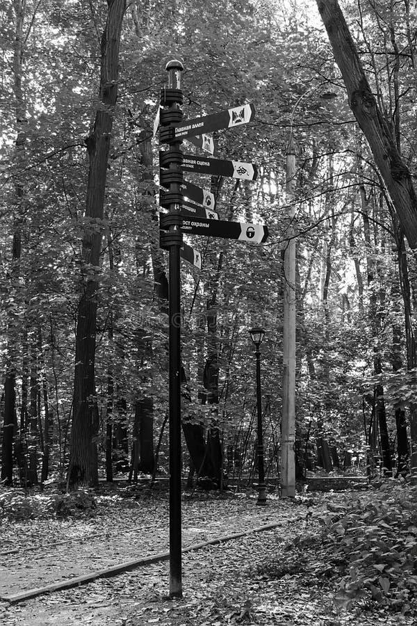 Indicateur sur le fond des arbres de bouleau en parc photos libres de droits