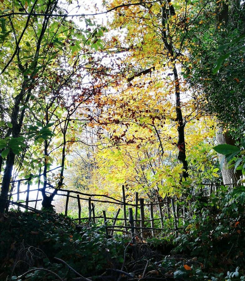 Indicatore luminoso attraverso gli alberi fotografia stock