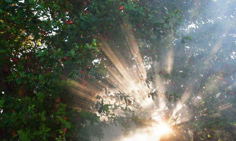 Indicatore luminoso del raggio su sfondo naturale fotografie stock libere da diritti