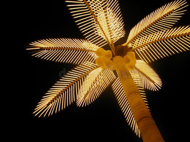 Indicatore luminoso di notte della palma immagine stock libera da diritti