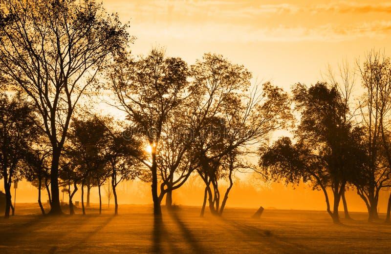 Indicatore luminoso di Sun di primo mattino fotografia stock libera da diritti
