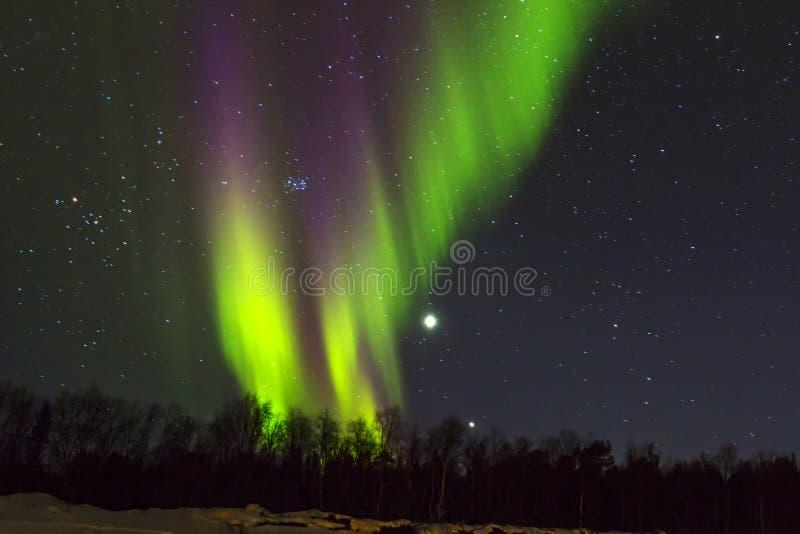 Indicatori luminosi nordici (borealis dell'aurora) sopra snowscape. immagine stock libera da diritti