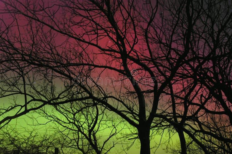 Indicatori luminosi nordici dietro la siluetta dell'albero immagine stock