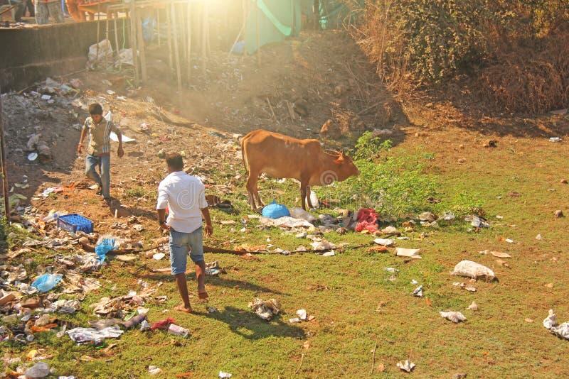 Indien Anjuna, Januari 24, 2018 En röd ko står bland avskrädet och smutsen på marknaden royaltyfria foton
