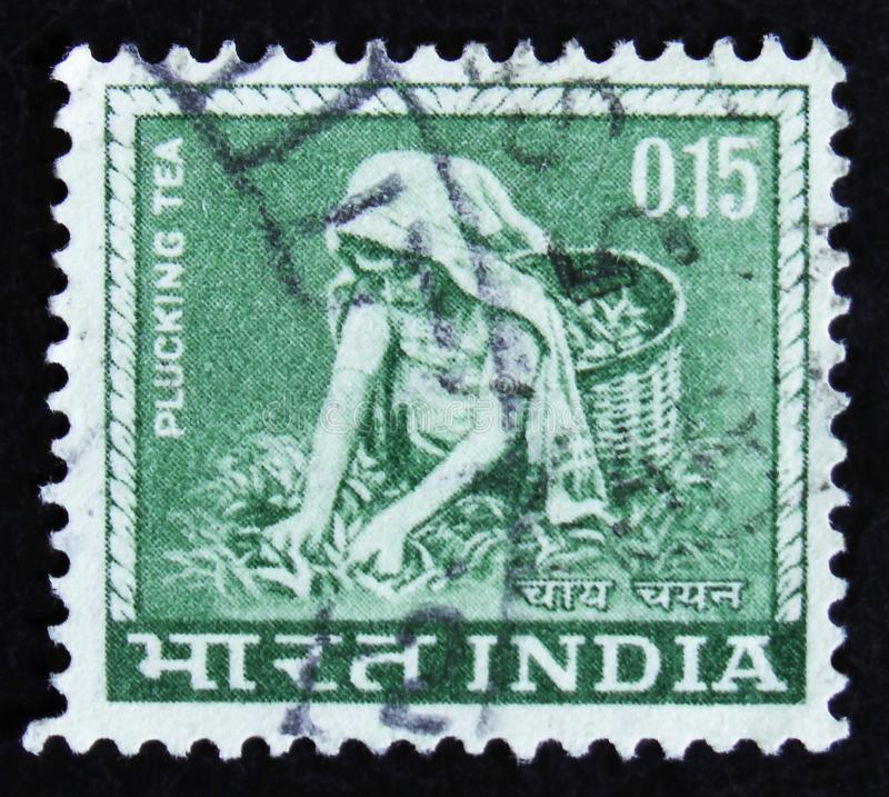 Indien-Briefmarke zeigt Teesammelnarbeitskraft, circa 1965 lizenzfreies stockfoto