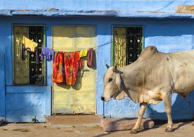 Indien Rajasthan Jodhpur royaltyfria foton