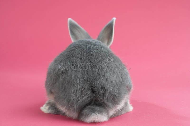 Indietro di un coniglio fotografia stock