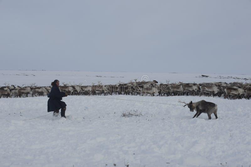 Indigène arctique russe ! image libre de droits