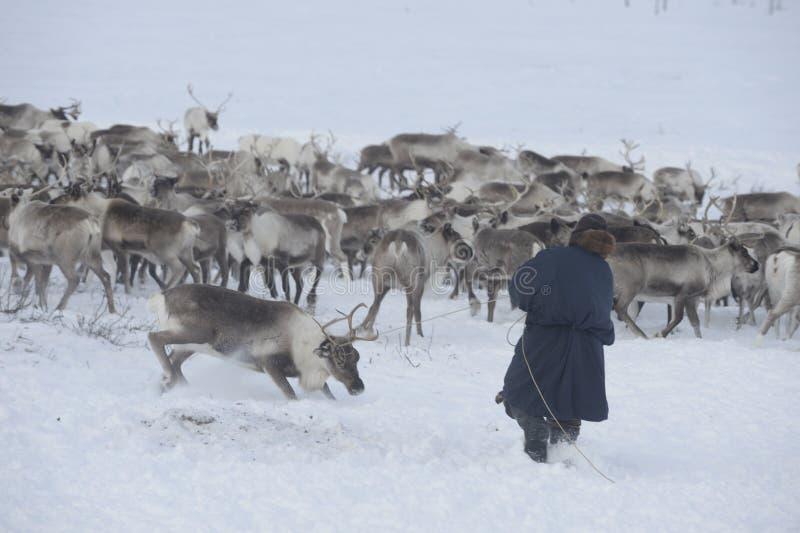 Indigène arctique russe ! photo libre de droits