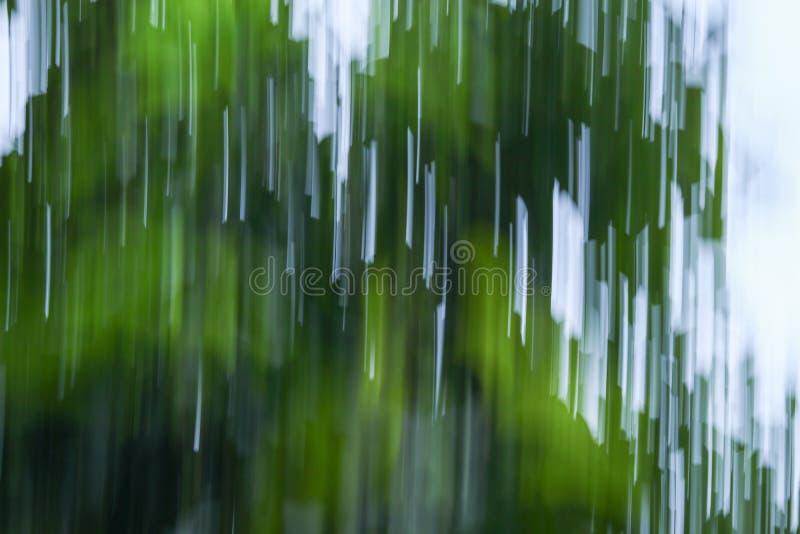 Indique el fondo borroso del verde de la falta de definición de la naturaleza del extracto del follaje foto de archivo libre de regalías