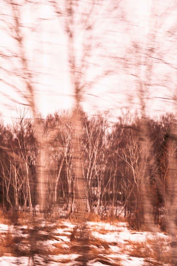 Indique el otoño borroso - árboles del amarillo del paisaje del invierno con c imagen de archivo