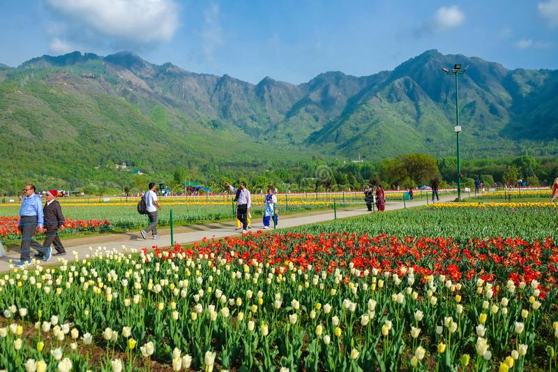 Indira Gandhi Memorial Tulip Gardens, in Srinagar, Jammu en Kashmir, India royalty-vrije stock fotografie