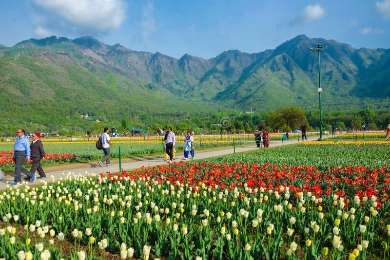Indira Gandhi Memorial Tulip Gardens, in Srinagar, Jammu und Kashmir, Indien lizenzfreie stockfotografie