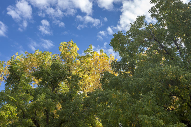 Indirecta del color del otoño foto de archivo