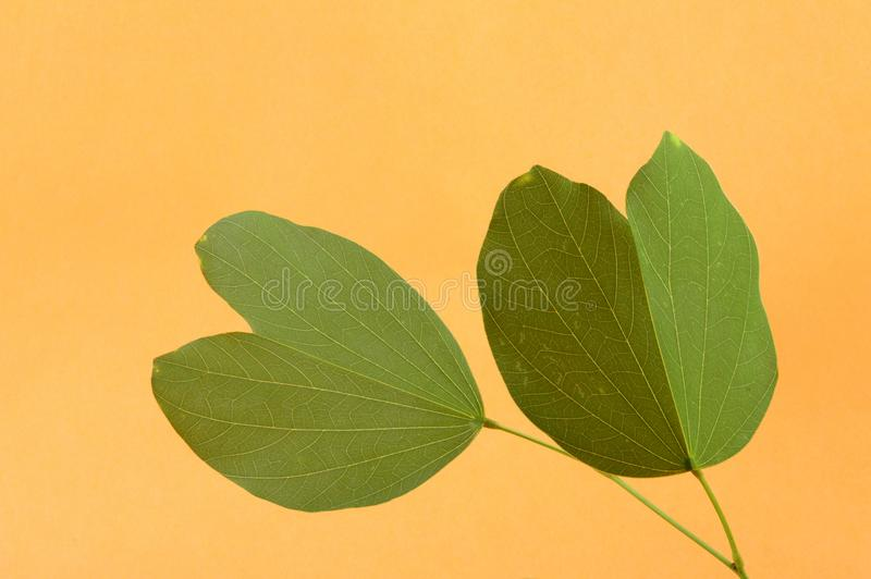 Indisch Festival Dussehra, die gouden blad tonen stock afbeelding