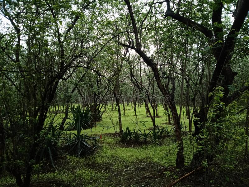 Indisch heuvelsbos in regen stock afbeelding