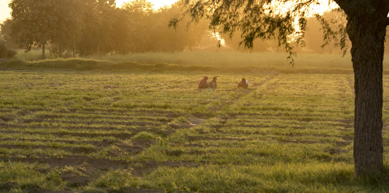 Indisch landbouwbedrijf royalty-vrije stock foto