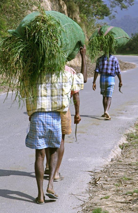 Indische Arbeitskräfte, die grassload tragen stockbilder