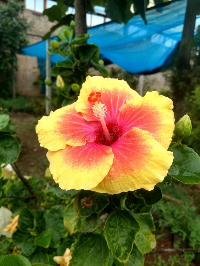 Indische de tuin mooie bloemen van het dorpsleven royalty-vrije stock foto