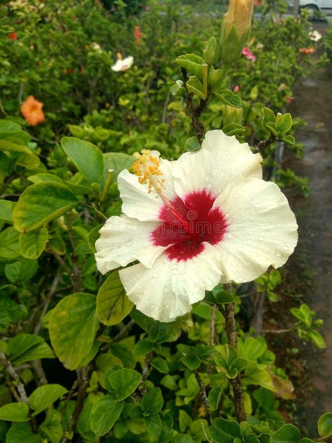 Indische de tuin mooie bloemen van het dorpsleven royalty-vrije stock foto's