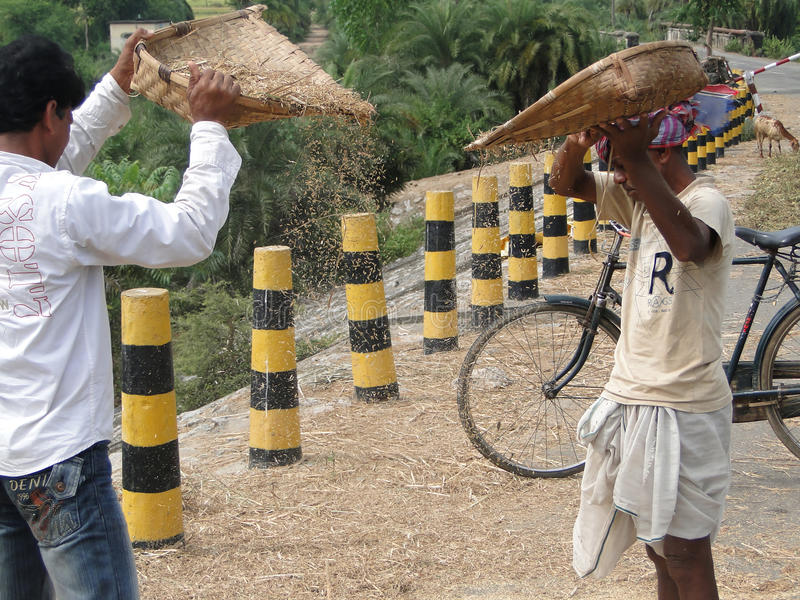 Indische Dorfbewohner dreschen ihr Korn lizenzfreies stockfoto