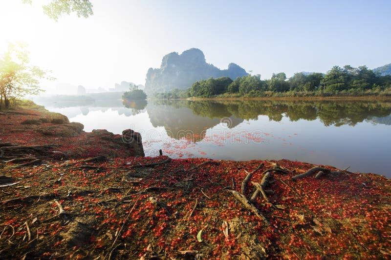 Indische Eiche, Frischwassermangrovenblume stockbild