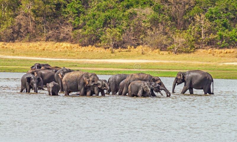 Indische Elefanten lizenzfreies stockbild