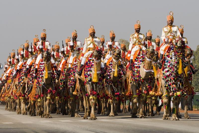 Indische Kamele auf Parade stockbild
