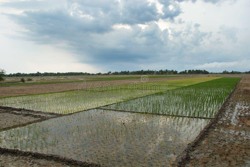 Indische Landbouw royalty-vrije stock foto's