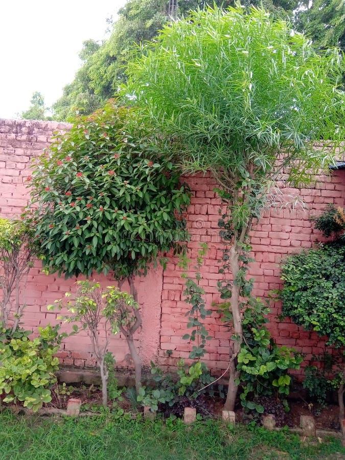 Indische mooie tuin royalty-vrije stock afbeelding