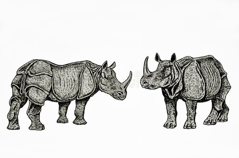 Indische Nashornpaare vektor abbildung