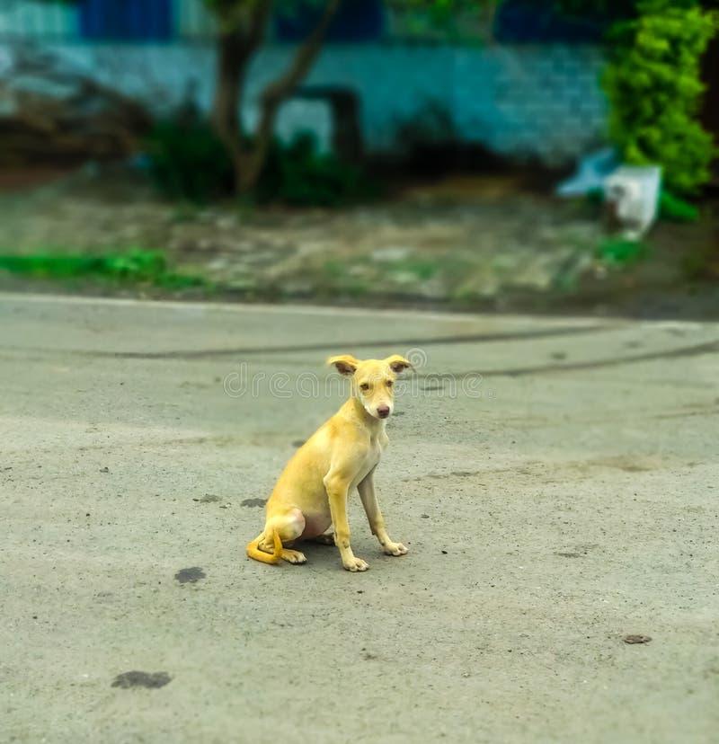 Indische nette Hundehaltung auf Straße lizenzfreie stockfotografie