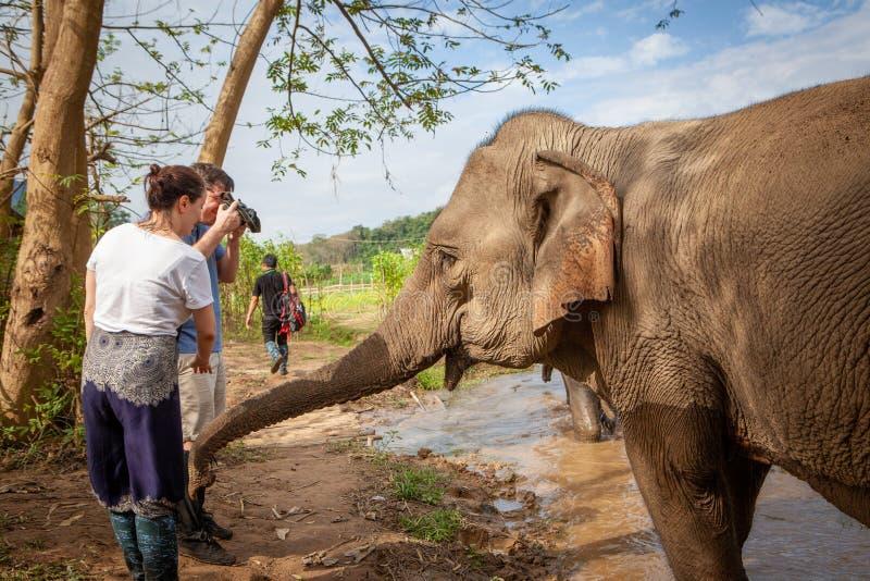 Indische Olifant wat betreft toeristen met zijn boomstam De toeristen nemen dichte omhooggaande foto's Luang Prabang, Laos stock foto