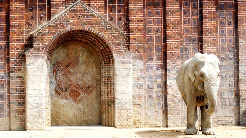 Indische Olifanten stock foto