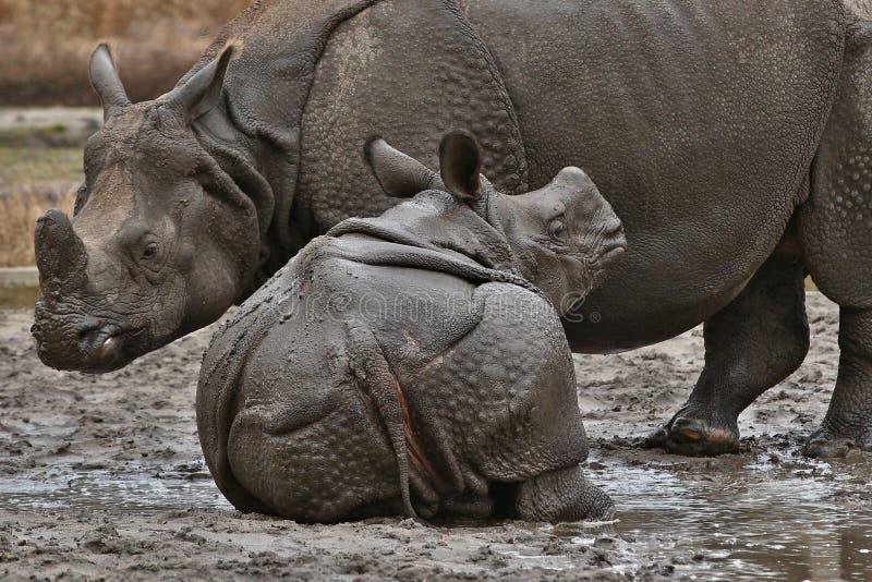 Indische rinocerosmoeder en een baby in de mooie aard die habitat kijken royalty-vrije stock afbeelding