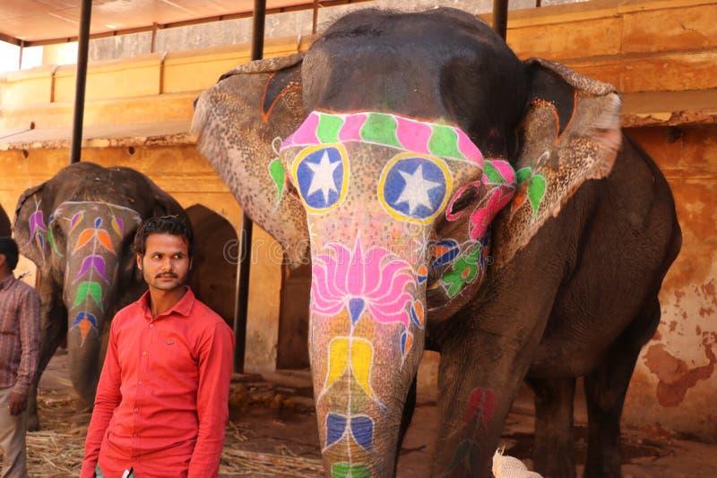 Indischer Elefant stockbilder
