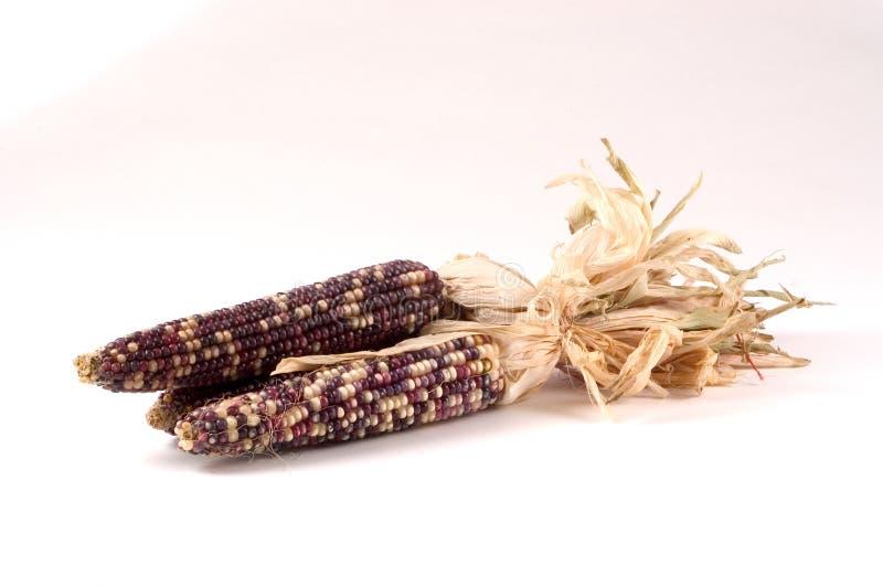 Download Indischer Mais stockbild. Bild von getrocknet, mais, gefärbt - 27857