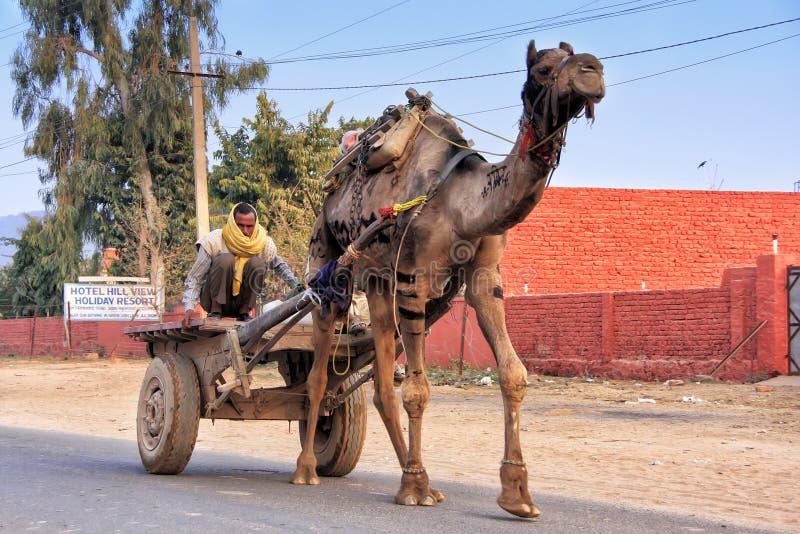 Indischer Mann, der Kamelwarenkorb, Sawai Madhopur, Indien fährt lizenzfreie stockfotografie