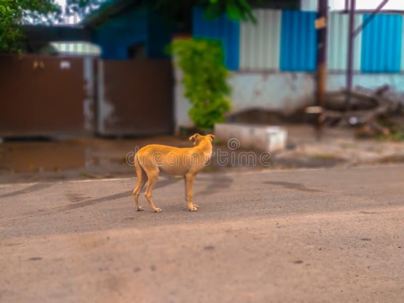 Indischer netter Hund auf Straße lizenzfreies stockfoto