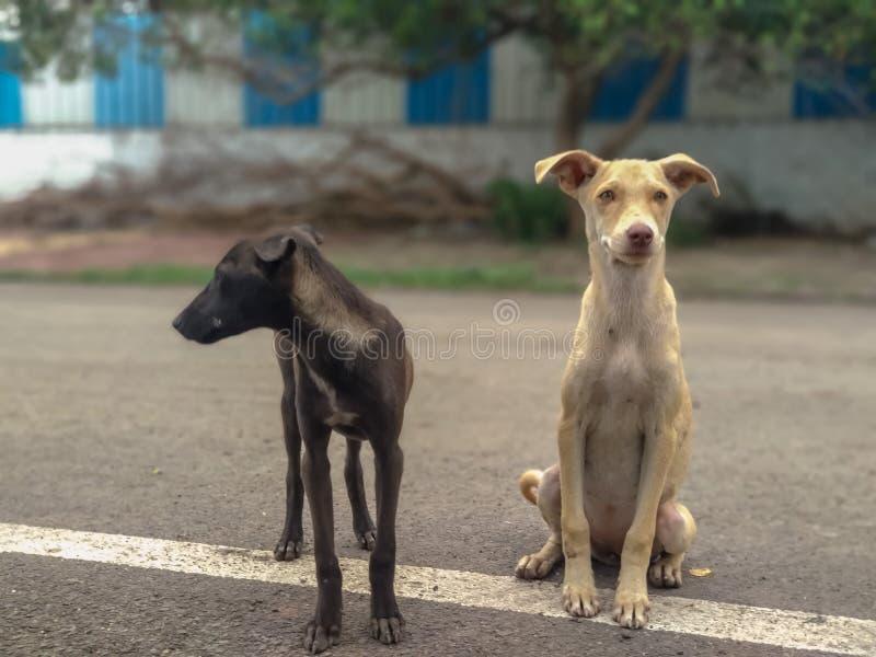 Indischer netter Welpe zwei auf Straße lizenzfreies stockbild