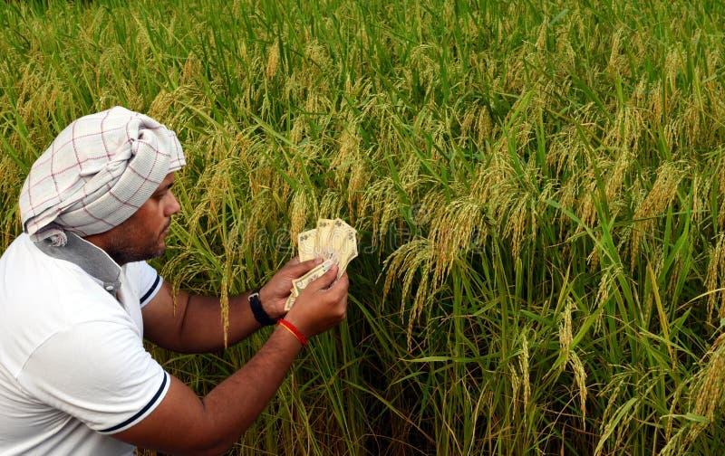 Indischer oder asiatischer Landwirt, der Geld vor üppigem grünem Reispaddybauernhof, Konzept des Verdienens des Geldes in der Lan lizenzfreies stockbild