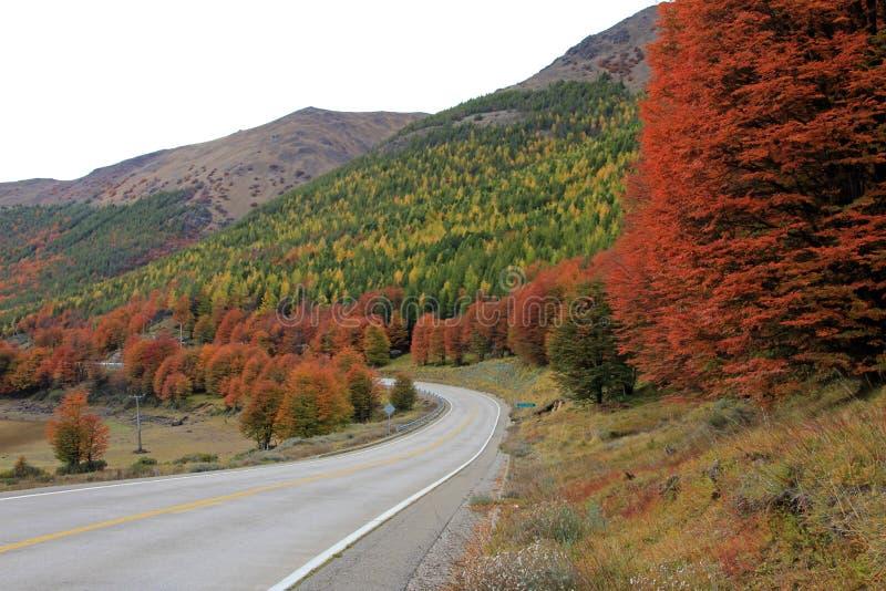 Indischer Sommer Schöne farbige Bäume, Wald, entlang Carretera Austral, Chile stockbilder