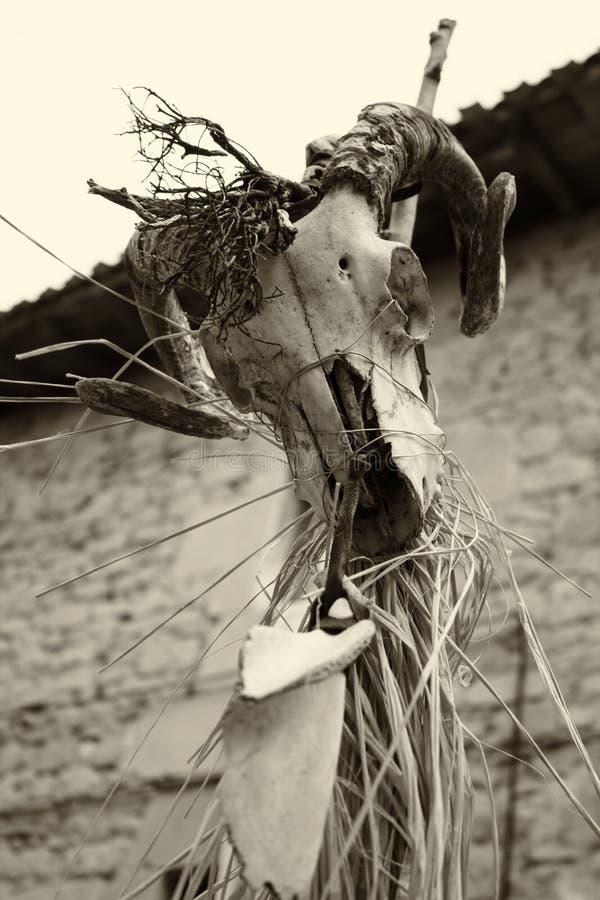 Indischer Ziegensch?del lizenzfreie stockbilder