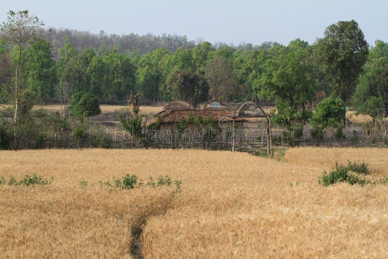 Indisches Dorf mit Getreidefeld lizenzfreie stockfotos