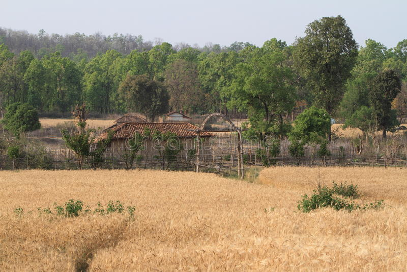 Indisches Dorf mit Getreidefeld stockfotografie